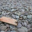 Drift wood on pebbles — Stock Photo