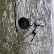 Tree trunk with hole — Foto Stock