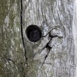 Tree trunk with hole — 图库照片
