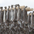Stock Photo: Dried cod stockfish