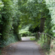 Stock Photo: Country Lane in British Countryside