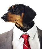 Tax huvudet på affärsmannens kropp — Stockfoto