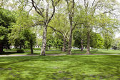 View across shady grass into park — Stock Photo
