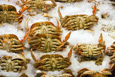 Crabs on display at fish market — Stock Photo