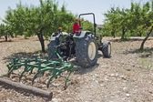 Farmer ploughs olive grove in Murcia — Stock Photo