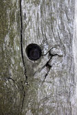 Tree trunk with hole — Stock Photo