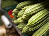 Gourd plant — Foto Stock