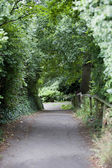 Country Lane in British Countryside — Stock Photo
