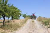 Farmer drives tractor on hillside with olive grove — Stock Photo