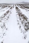 Snow covered field — Stock Photo