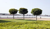 Trees planted by river in city — Stock Photo
