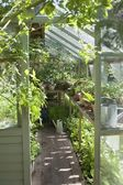 Sunlit greenhouse — Stock Photo