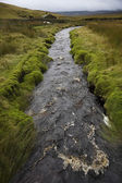 Brook in Yorkshire Dales — Stock Photo
