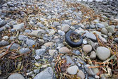 Discarded tire litters — Stock Photo