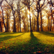 Landscape with sun beams in the autumn wood — Stock Photo