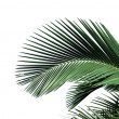 Palm leaf — Stock Photo