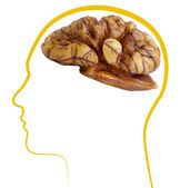 Walnut good brain health — Stock Photo