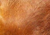 Brown textured cowhide — Stock Photo