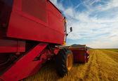 麦畑で作業を組み合わせる — ストック写真