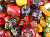 Color assortment of peppers — Stock Photo