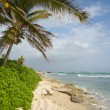 Stock Photo: Coconut tree on Beach at Barbars Point