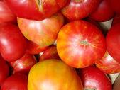 Big Juicy Tomatoes — Stock Photo