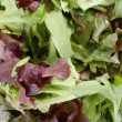 Spring Leaf Lettuce Mix — Stock Photo