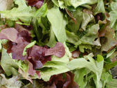 Spring Leaf Lettuce Mix — Foto de Stock