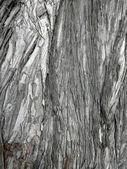 Ağaç kabuğu yakın çekim — Stok fotoğraf