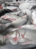 Frozen in a block of Ice Fish for sale at store — Stock Photo