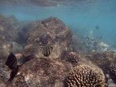 Fish swim around coral under the waters of Hanauma Bay — Stock Photo