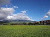 Grass field in a Park in Kaanapali on Maui, Hawaii — Foto Stock