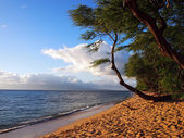 Kaanapali Beach at Dusk with trees and Lanai in the distance — Stock Photo