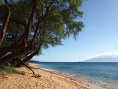 Kaanapali Beach with gentle waves and tall rugged trees — Stock Photo