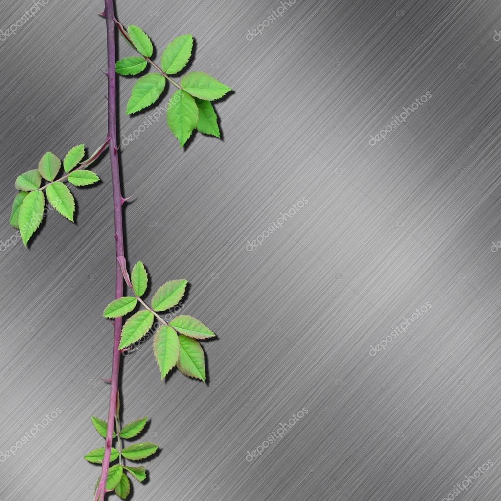 A Brushed Metal Background with Thorny Branch and Leaves — Stock Photo #12850193
