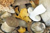 Porcini and Chanterelle mushrooms — Stock Photo