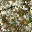 Spring Swallowtail Butterfly — Stock Photo
