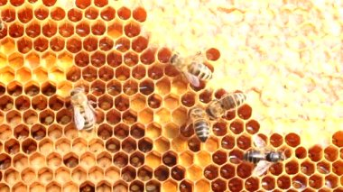 Work bees in the hive — Stock Video