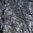 Dark branches background pattern — Stock Photo