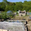Stock Photo: Allotment beds in Summer