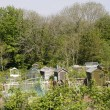 Stock Photo: Allotment in Spring