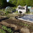 Stock Photo: Growing vegetables in allotment