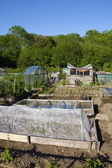 Allotment beds in Summer — Stock Photo