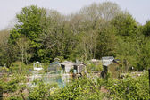 Allotment in Spring — Stock Photo