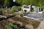 Growing vegetables in an allotment — Stock Photo