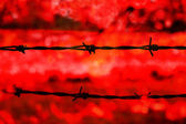 Barbed wire on red background — Stock Photo