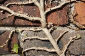 Wspinaczka roślin z bliska — Zdjęcie stockowe