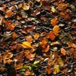 Autumn leaves on a metal grid — Stock Photo #30892391