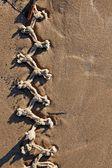 узловатые веревки на песчаном пляже — Стоковое фото