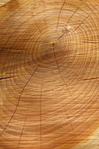 Sawn timber showing annual rings — Stock Photo